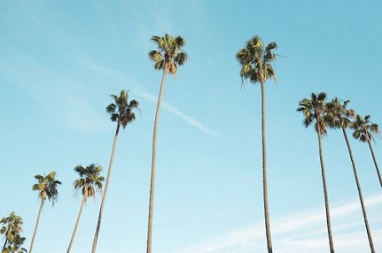 palm-trees-1209185_1280